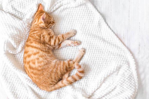 Ginger cat relaxing picture id1142424184?b=1&k=6&m=1142424184&s=612x612&w=0&h=8y7tzqgeeohhrlc1cpscys007dqlahctei zdslbtdc=