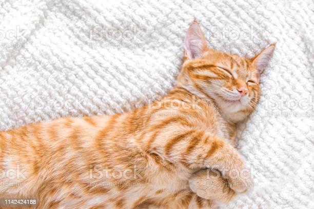 Ginger cat relaxing picture id1142424188?b=1&k=6&m=1142424188&s=612x612&h=oomzbqmsd6ya jb mtpcxodemjhnw q9nn zlkilfh8=