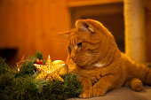 ginger cat sits beside advent wreath, looks at golden star