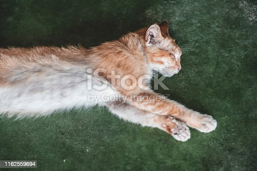 Ginger cat sleeping on a green floor.
