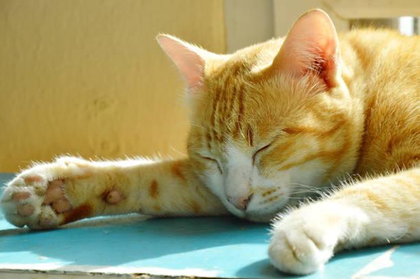 ingwer auf holzschrank schlafende katze - katzenschrank stock-fotos und bilder