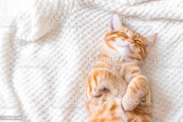 Ginger cat sleeping picture id1128481108?b=1&k=6&m=1128481108&s=612x612&h=ttuiix4x2afi8zop9jmagfozhk52udaj vx npifo9o=