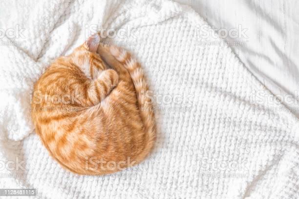Ginger cat sleeping picture id1128481115?b=1&k=6&m=1128481115&s=612x612&h=9m3mici4fzwb1kmqmvzwosmkkq87g2alw fvzzpvuao=
