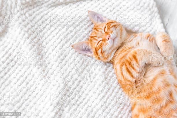 Ginger cat sleeping picture id1128481117?b=1&k=6&m=1128481117&s=612x612&h=wstnvm6 ziwifygk xbjdzk7zip2v5puqbmgm 9biq8=