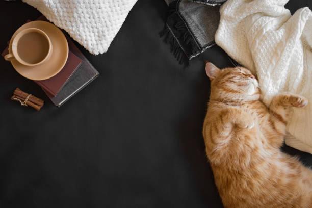 Ginger cat sleeping picture id1166407296?b=1&k=6&m=1166407296&s=612x612&w=0&h=lnnskro6o8q tdjieg9ltigmol7wdarevz4boywthzc=