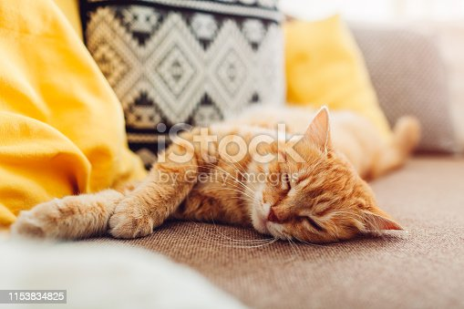 Ginger cat sleepng on couch in living room surrounded with cushions. Pet relaxing at home