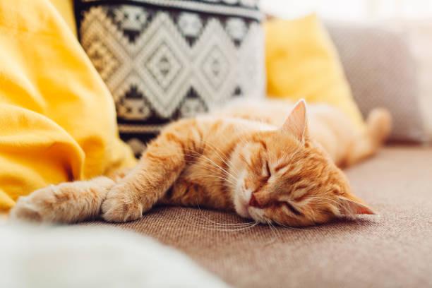 имбирь кошка sleepng на диване в гостиной в окружении подушек - white background стоковые фото и изображения