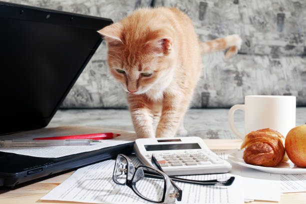 Ginger cat standing on table and looking at laptop and working papers picture id1213889632?b=1&k=6&m=1213889632&s=612x612&w=0&h=df3ukpkjw0ypi9vynlmvfnbfwdvg1zy wjlw3 8ungm=
