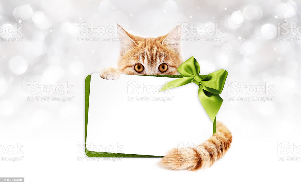 ginger cat with gift card and green ribbon bow stock photo