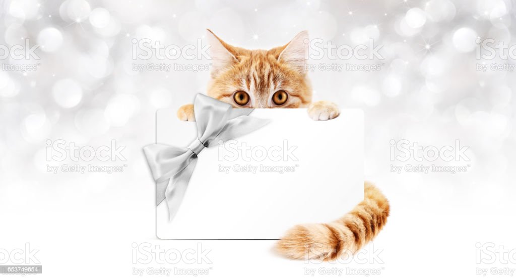 ginger cat with gift card and silver ribbon bow stock photo