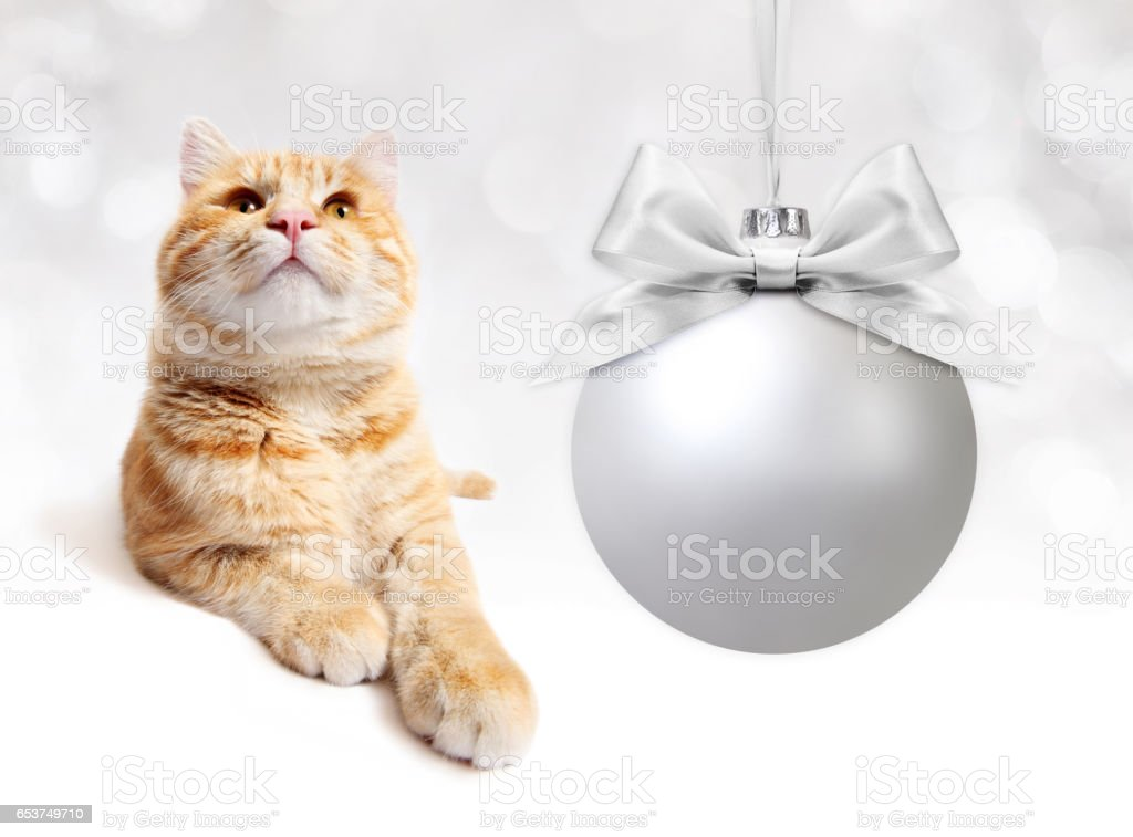 ginger cat with silver christmas ball whit ribbon bow on white background stock photo
