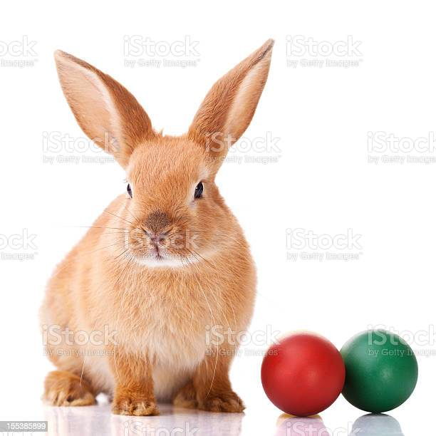 Ginger easter bunny with two colorful balls on the side picture id155385899?b=1&k=6&m=155385899&s=612x612&h=ity  u6g5mvdezvcurfqi2lmjmbvyouhxbgypkd4pxe=
