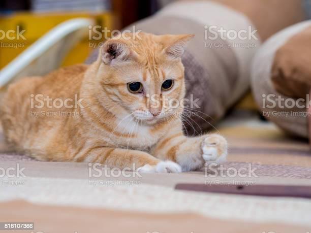 Ginger fat cat on bed picture id816107366?b=1&k=6&m=816107366&s=612x612&h=upp ongki5kbrt5kwv tukoaorhfmkv0b ifnczvr5w=