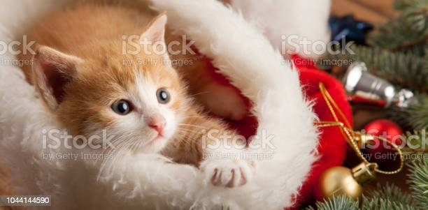 Ginger kitten in santa hat against the background of a christmas tree picture id1044144590?b=1&k=6&m=1044144590&s=612x612&h=oayqby11itxipkm6qkrxutj37cgtm7xmiwmph1cgc4c=