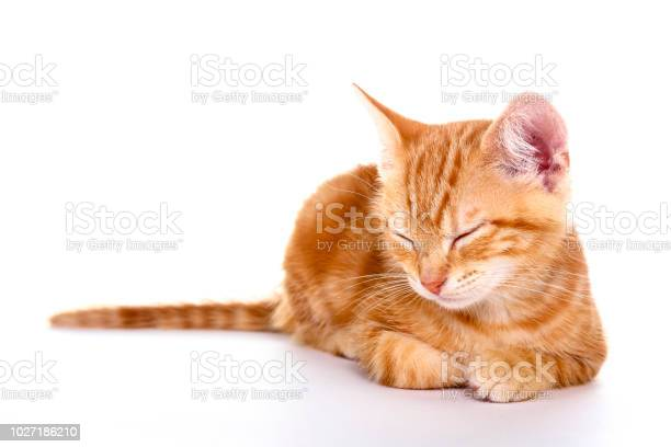 Ginger kitten picture id1027186210?b=1&k=6&m=1027186210&s=612x612&h=5dc1v8zrlchn6ifti8g8mxjb2kgfxuwo1s1asn7nowk=