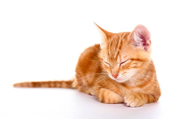 Ginger kitten picture id1027186210?b=1&k=6&m=1027186210&s=612x612&w=0&h=0lidj6b1fz7mi3bnkqenpkd8lam4tlw8u0bdbnmjvj4=