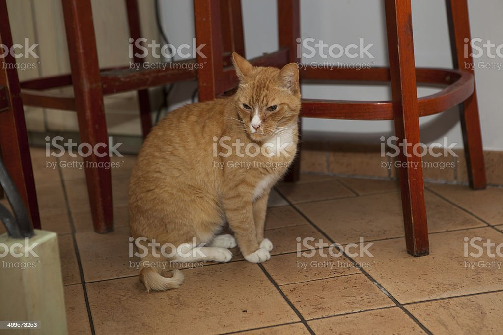 Ginger kitten royalty-free stock photo