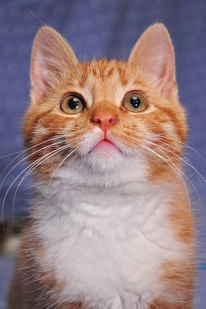 Best Lucy Cat Stock Photos, Pictures & Royalty-Free Images