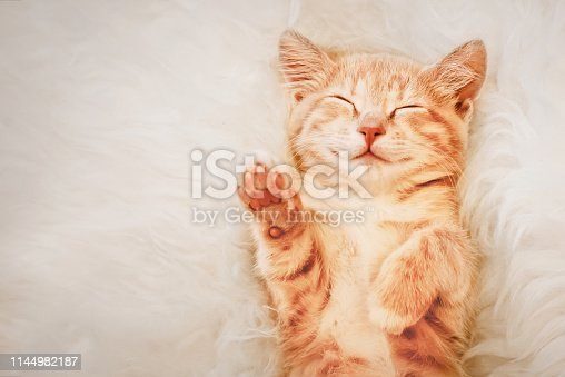 Ginger kitten raised his paw up in a dream. The concept of choice and voting