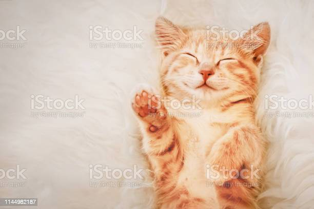 Ginger kitten raised his paw up in a dream the concept of choice and picture id1144982187?b=1&k=6&m=1144982187&s=612x612&h=hizzdcqckugicxv mh cwoh9nllcg7nx5mf0lkxdgzw=