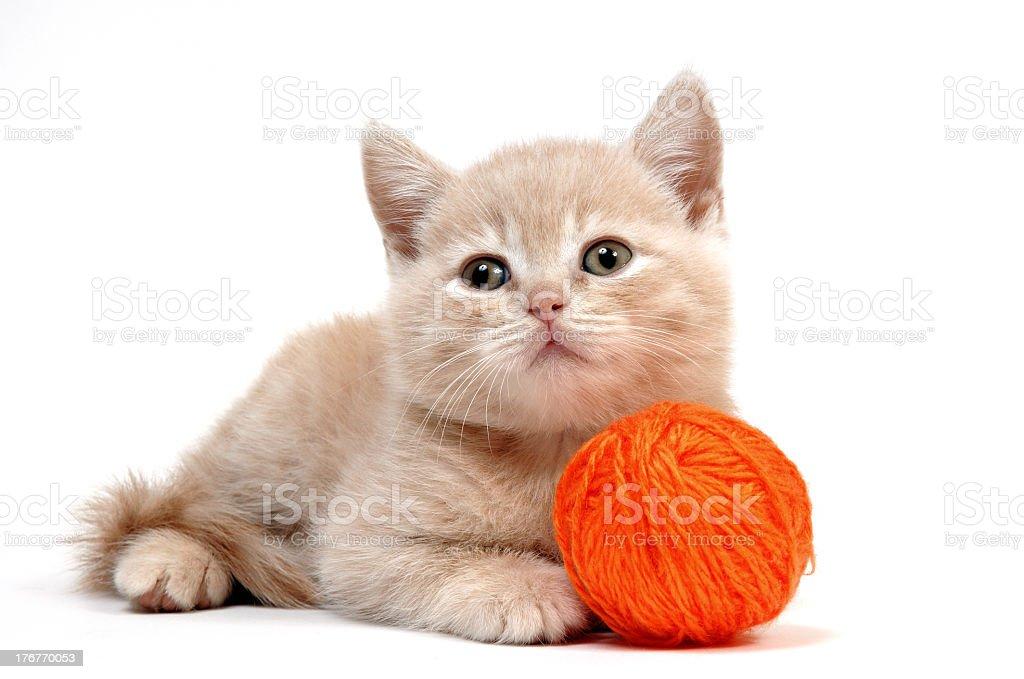 Ginger kitten with ball of orange yarn on white background royalty-free stock photo