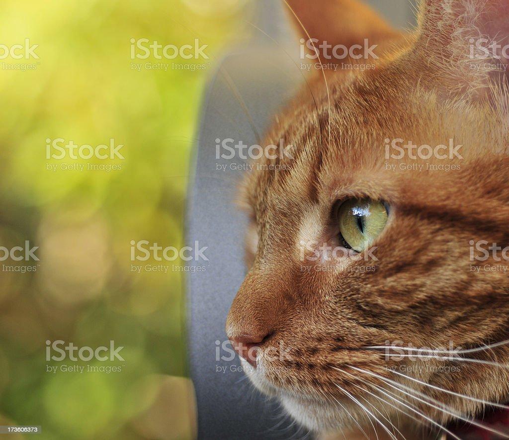Ginger Looks Left stock photo