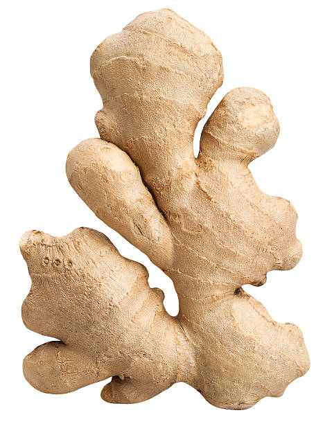 ginger - ginger stock photos and pictures