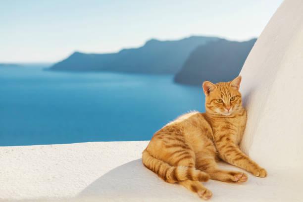 Ginger Stray Cat in Oia Santorini stock photo