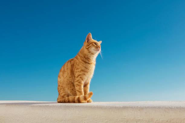 Ingwer-streunende Katze in Oia Santorini – Foto