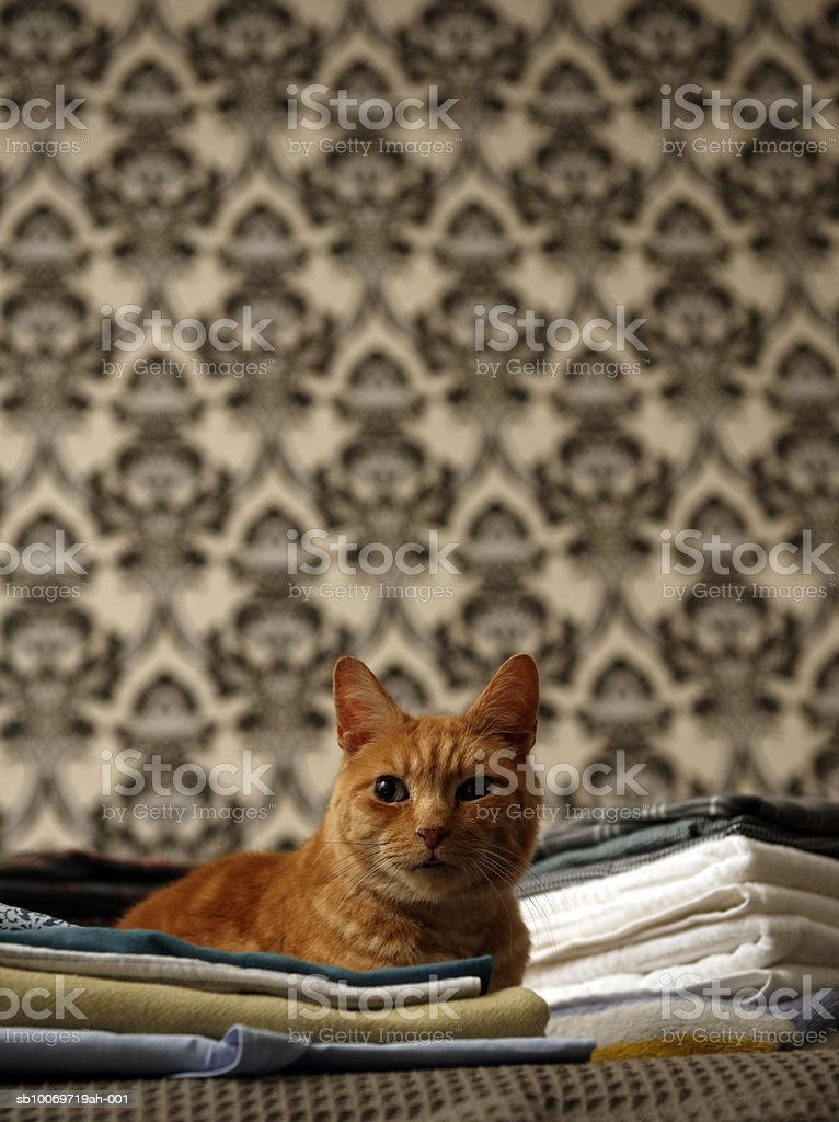 Ginger tabby cat sitting on top of pile folded laundry royalty-free stock photo