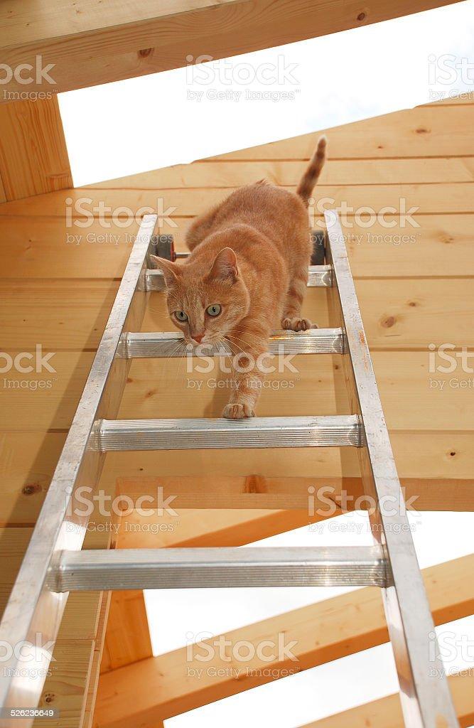 Ginger Tom Descending Ladder stock photo