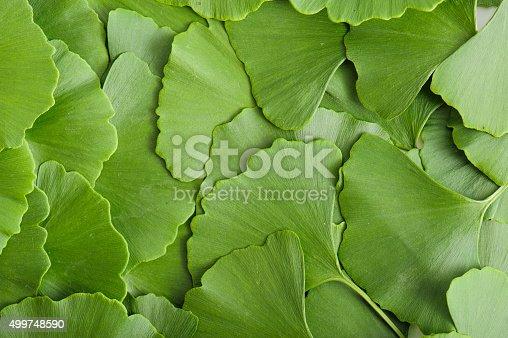 Scattered gingko biloba leaves making a natural background