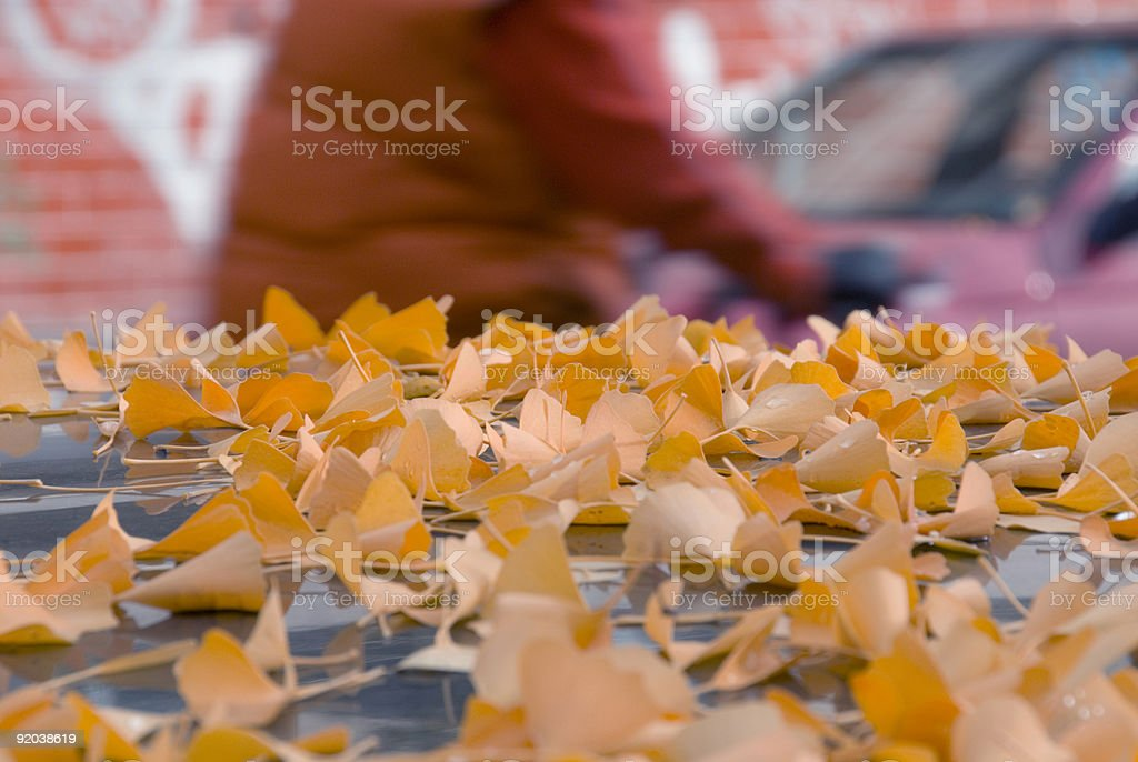 Gingko leaves stock photo