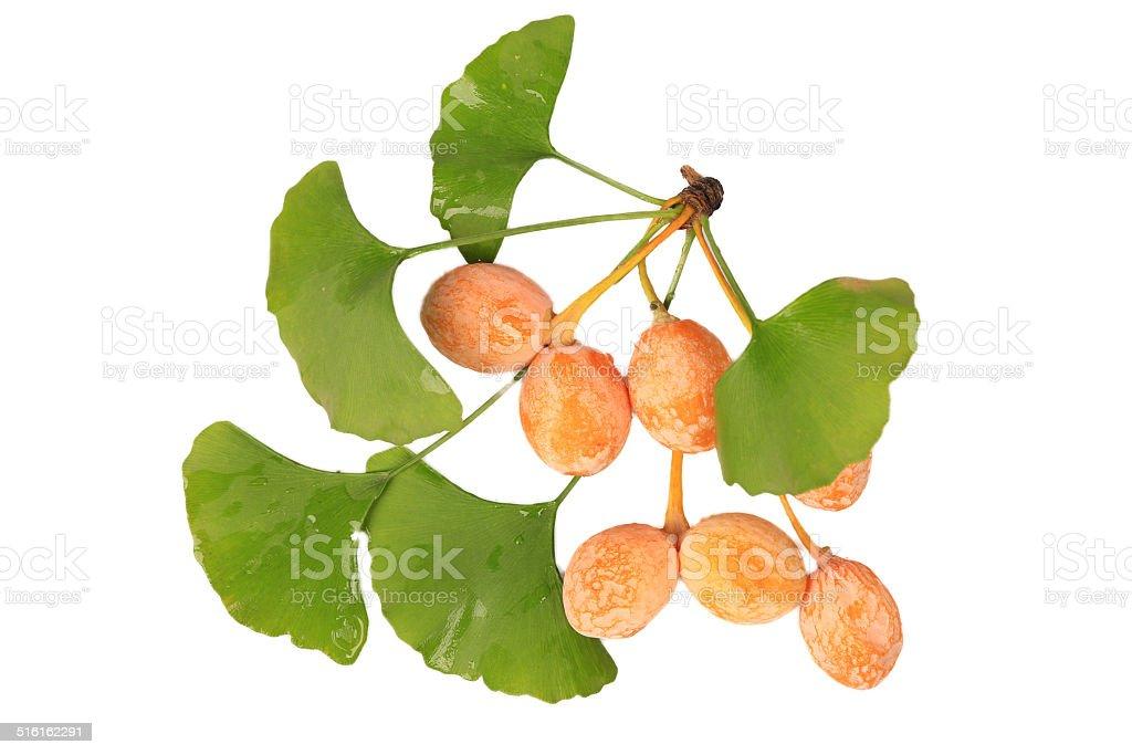 Ginkgo Biloba fruits cross section isolated on white stock photo