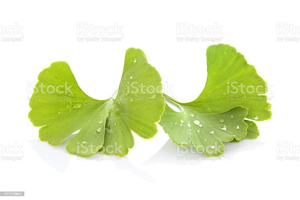Ginkgo biloba. - Royalty-free Alternative Medicine Stock Photo
