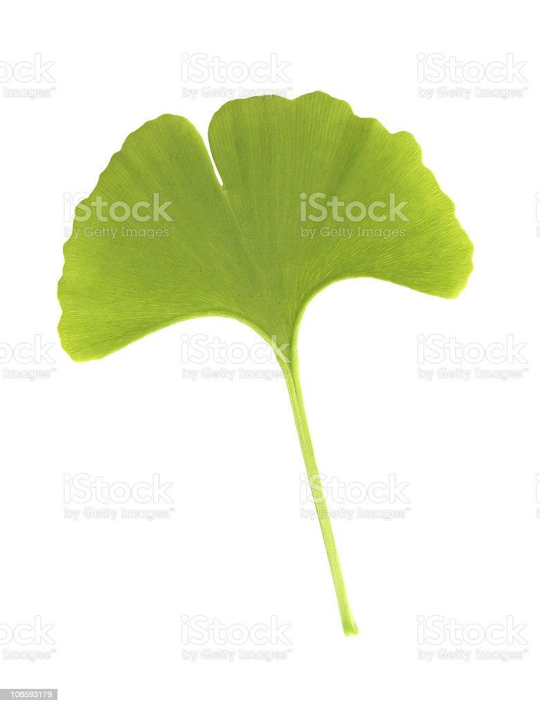 Ginkgo leaf isolated on white royalty-free stock photo