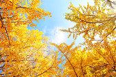 ディス秋の葉