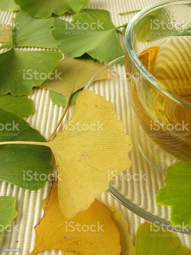 Ginkgo tea stock photo