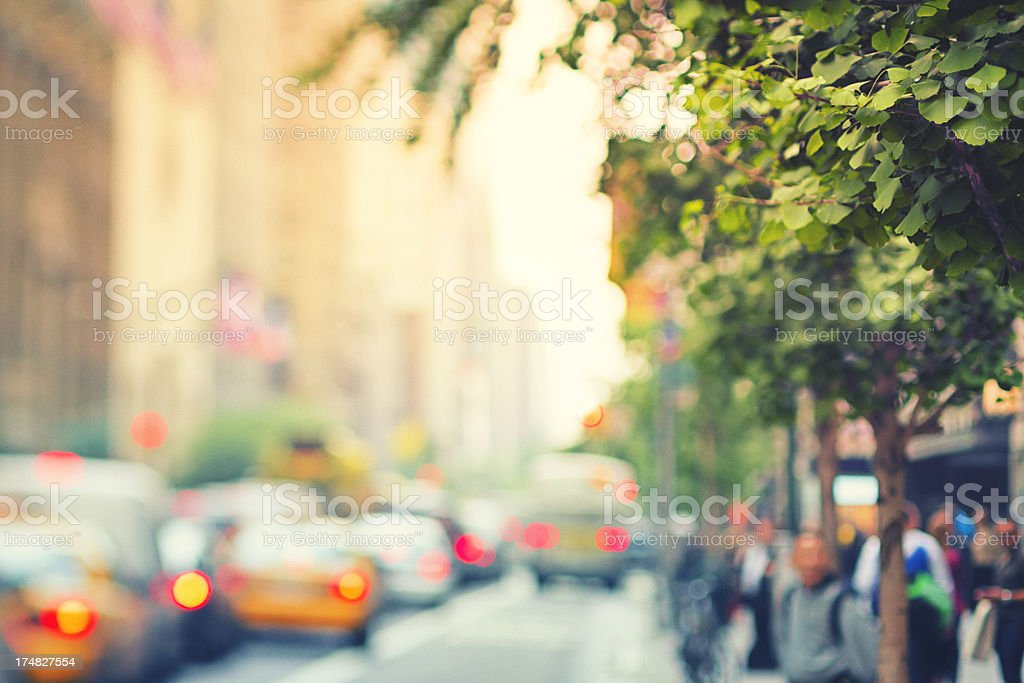 Ginkgo tree in New York City royalty-free stock photo