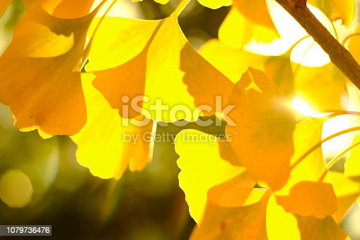 Leaf background with bokeh in autumn.