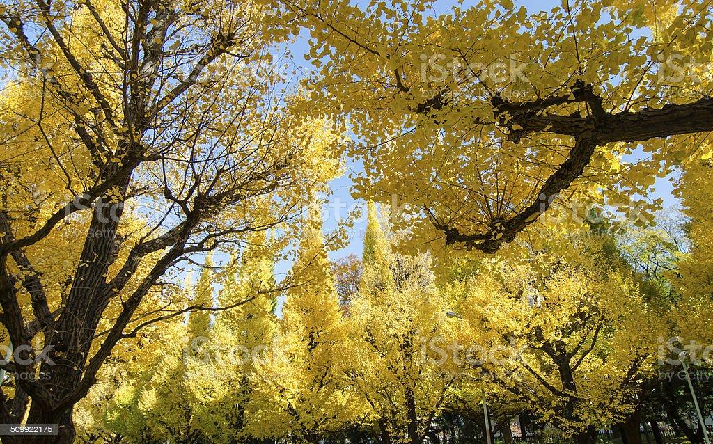 ディスの木の庭園、東京,日本 ストックフォト