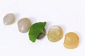 Fresh ginko biloba leaf over natural pebbles
