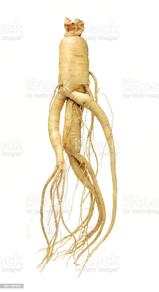 Ginseng  isolated  on the white background stock photo