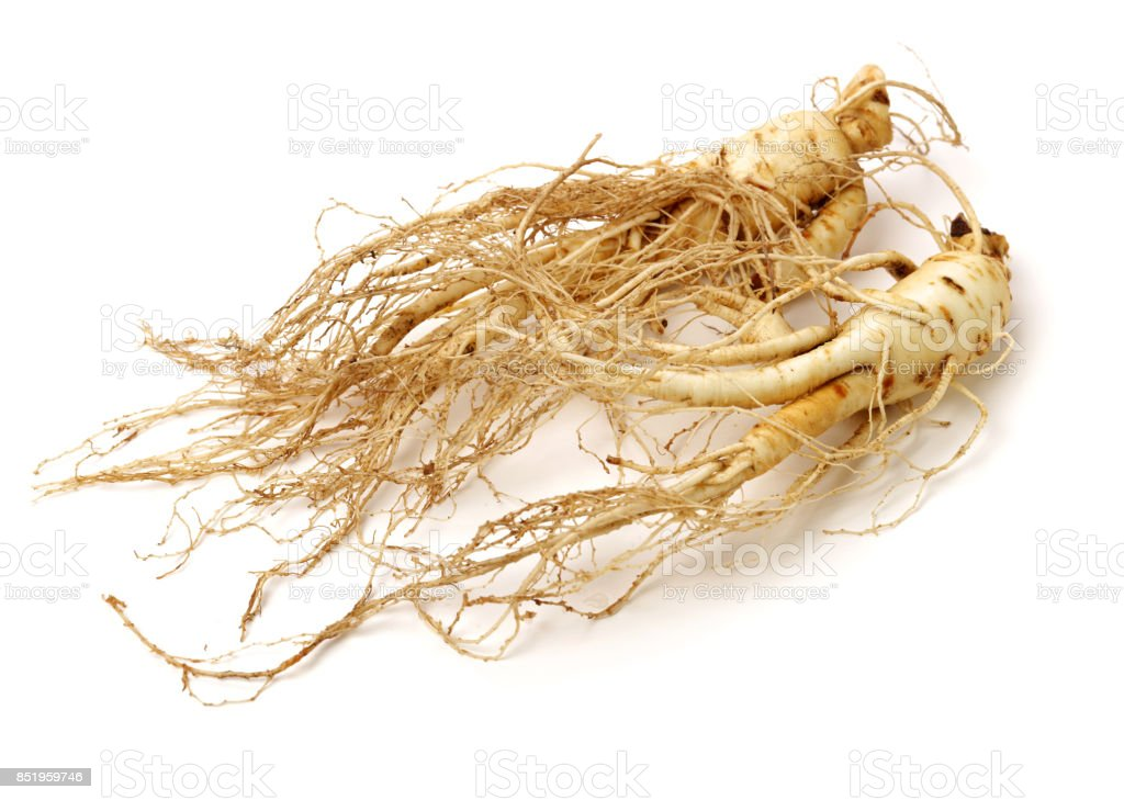Ginseng  on the white background stock photo