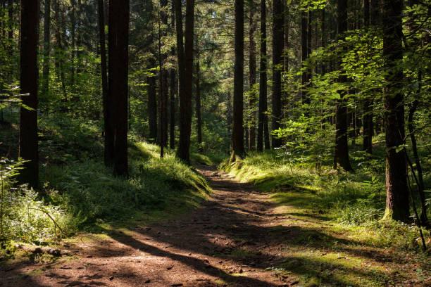 giochi di luce sul sentiero nel bosco giochi di luce nella stradina nel bosco percorso stock pictures, royalty-free photos & images