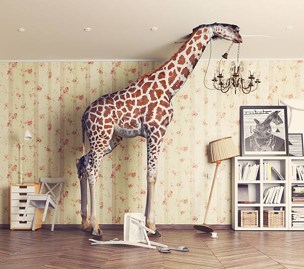 giraffe  in the living room - humor stock photos and pictures