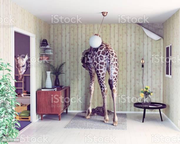 Giraffe in the living room picture id650257858?b=1&k=6&m=650257858&s=612x612&h=wzi0nilsj4d4zrh0acj 4uaqaatjahj67lq4gv8plko=