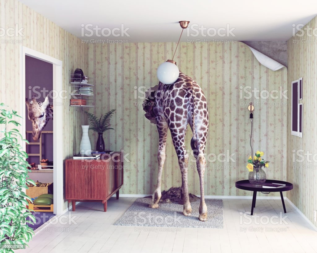 giraffe in the living room stock photo