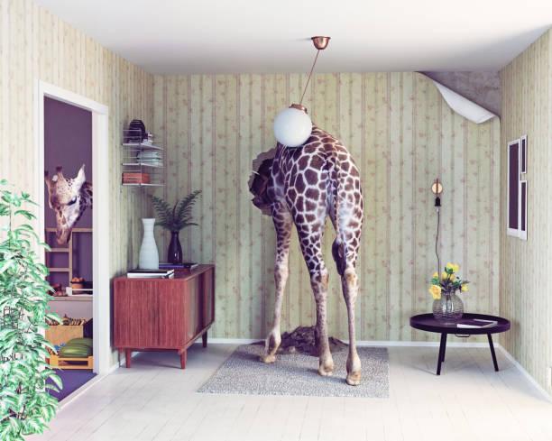 Girafe dans le salon - Photo