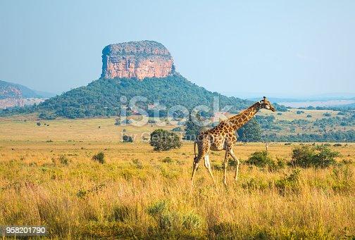istock Giraffe Landscape in South Africa 958201790